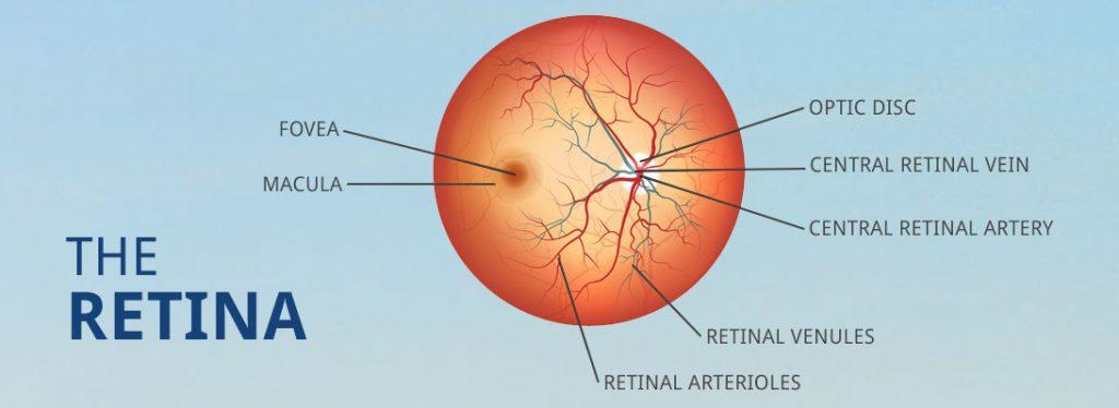 the-retina